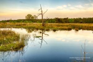 Groote Zand heide Hooghalen, Drenthe
